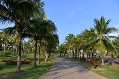 Jardín de la palma Imágenes de archivo libres de regalías