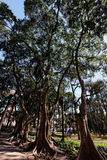 Jardín de Luz en Sao Paulo Imagenes de archivo
