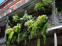 Jardín del helecho del balcón Fotografía de archivo libre de regalías