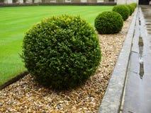 Jardín: detalle del seto del topiary - h Fotos de archivo libres de regalías