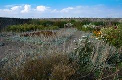 Jardín emparedado Imagen de archivo