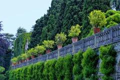 Jardín formal con los árboles de limón en potes Imagen de archivo