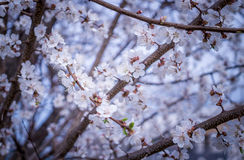 Jardín japonés de la primavera Imagenes de archivo
