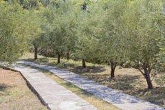 Jardín mediterráneo, primer la rama Foto de archivo libre de regalías