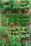 Jardín vertical Fotos de archivo