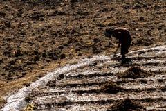 Jarkot, Nepal - 17 de novembro de 2015: Uma mulher idosa que ara a terra no outono atrasado imagens de stock