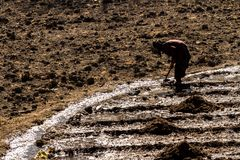 Jarkot, Nepal - November 17, 2015: An elderly woman plowing the land in late autumn stock images