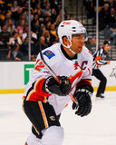 Jarome Iginla Calgary Flames Royalty Free Stock Photography