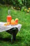 Jarro de citrinos frescos Fotos de Stock Royalty Free