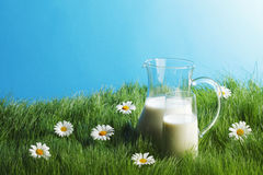 Jarro y vidrio de leche en campo de flor Foto de archivo