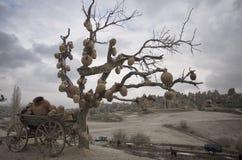 Jarros pendurados na árvore e no carro do cavalo fotografia de stock