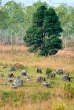 jars равнина Лаоса phonsavan Стоковое Изображение