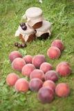 Jars av driftstopp med nektariner Arkivbild
