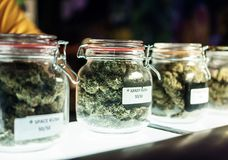 Jars Of Cannabis Flowers. A dispensary worker vending jars of cannabis stock photo