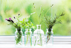 Jars of fresh herbs on window cill Stock Photos