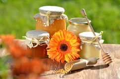 Jars full of delicious honey and bee pollen Stock Photography