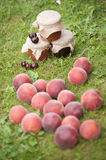 Jars of jam with nectarines. Jars of jam with cherries in a grass with many nectarines in a grass Stock Photography