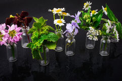 Jars with plants Royalty Free Stock Images