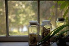 Jars in the Window Stock Photos