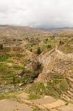 jaru colca Peru Zdjęcie Stock