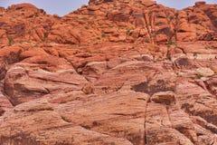 jaru czerwieni skały ściana Obraz Royalty Free