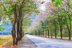 Jarul flower Royalty Free Stock Photos