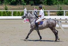 Jarzębaty szary koń i jeździec w białej koszula nad skokiem Fotografia Royalty Free