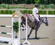 Jarzębaty szary koń i jeździec w białej koszula nad skokiem Zdjęcia Royalty Free