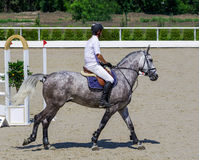 Jarzębaty szary koń i jeździec w białej koszula nad skokiem Obraz Stock
