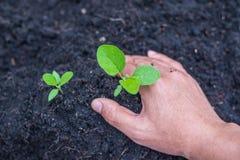 Jarzeniowa roślina Zdjęcie Royalty Free