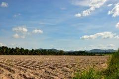 Jarzyć się kasawy plantacja i niebieskiego nieba tło fotografia royalty free