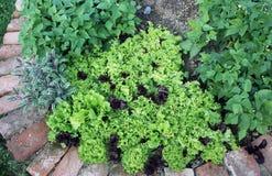 Jarzynowego ogródu łóżka z mieszanymi uprawami w domu uprawiają ogródek Obrazy Royalty Free