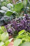 Jarzynowy kwiatu łóżko mieszane uprawy Fotografia Stock