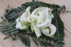 Jarzynowy Nucić Sesban Agasta Ptasi kwiat fotografia royalty free