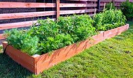 Jarzynowy ogród zdjęcie stock