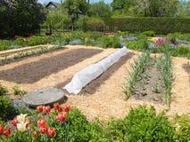 Jarzynowy ogród Obrazy Royalty Free