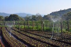 Jarzynowy ogród 1 obrazy stock