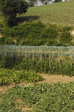 Jarzynowy ogród, fotografia ekologiczny jarzynowy ogród Obrazy Stock