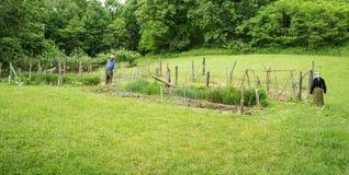 Jarzynowy ogród przy Johnson gospodarstwem rolnym przy szczytami wydra Zdjęcia Royalty Free