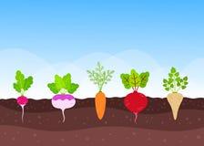 Jarzynowy ogród z narastającymi uprawami royalty ilustracja