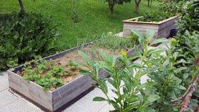 Jarzynowy ogród w wysokich ogrodowych łóżkach Fotografia Stock