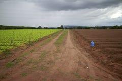 Jarzynowy uprawiać ziemię. zdjęcia royalty free