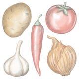 Jarzynowy ustawiający z cebulą, chili pieprzem, czosnkiem, grulą i pomidorem, ilustracja wektor