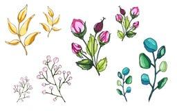 Jarzynowy ?wiat Kwiaty i ga??zki Delikatne gałązki kwiaty ilustracja wektor