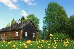 Jaskierów kwiatów żółty pole Obraz Stock