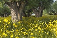 Jaskier łąka fotografia stock
