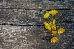 Jaskieru koloru żółtego kwiaty Zdjęcia Stock