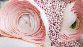 Jaskieru kwiat w g?r? menchia koloru delikatnie fotografia stock