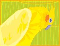 jaskrawa barwiona cockatiel papuga Fotografia Royalty Free
