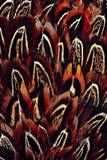 Jaskrawa brązu piórka grupa niektóre ptak Zdjęcia Stock